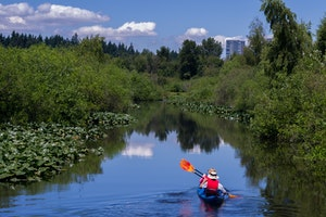 Mercer Slough