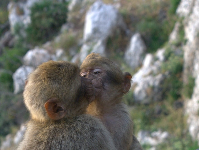 The Monkey Park in Gibraltar