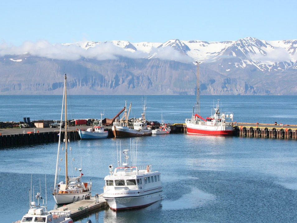 Whale Watching in Northern Iceland