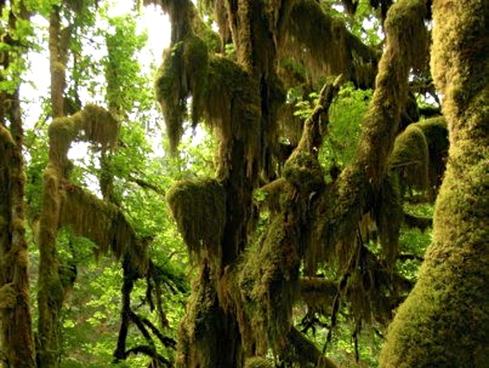 no spiders, but possibly elves Port Angeles Washington United States