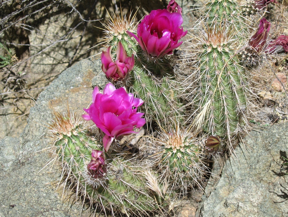 Sonoran Desert & Pinnacle Peak in Bloom Scottsdale Arizona United States