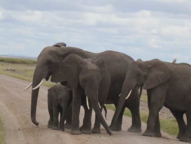 this is in Amboseli National park