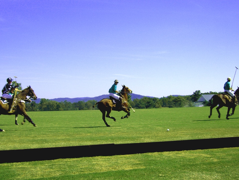 Ponies & polo made for a great afternoon Crozet Virginia United States