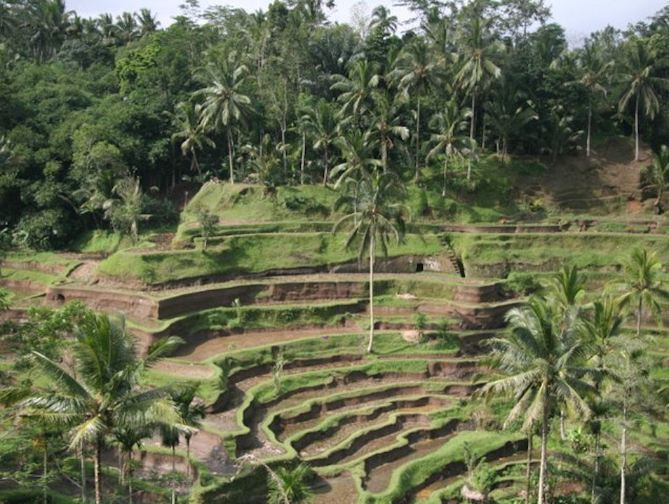 Who knew rice terraces could be so beautiful?