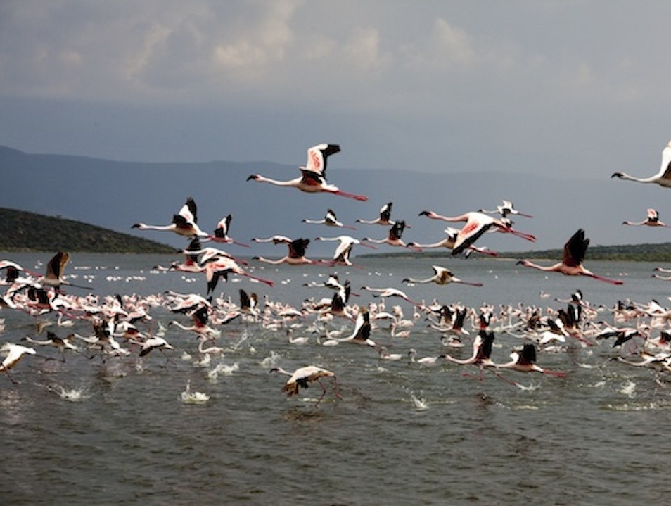 Lake Baringo and Lake Bogoria Rift Valley  Kenya