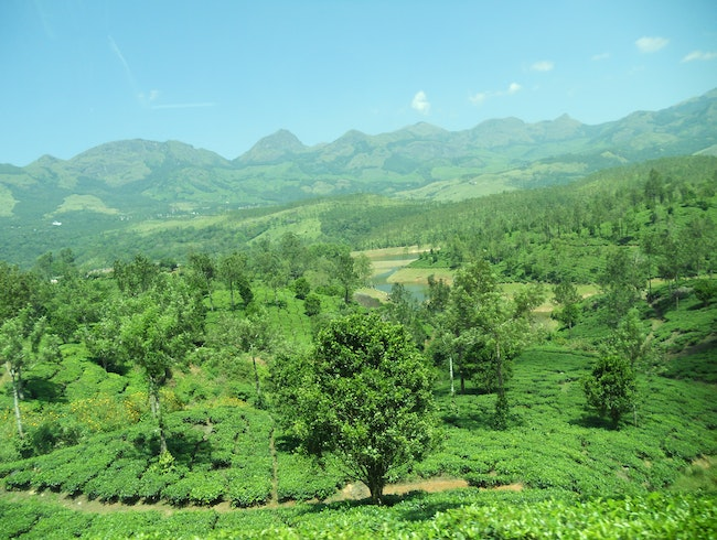 The Highlands of Munnar