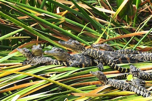 Florida Everglades Tour