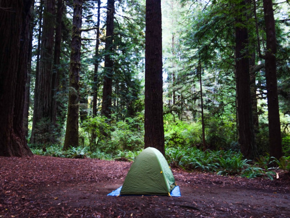 City Escape: Redwood Forest Orick California United States