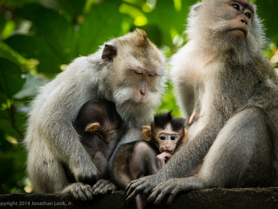 Bali's Beautiful Sacred Monkey Forest Ubud  Indonesia