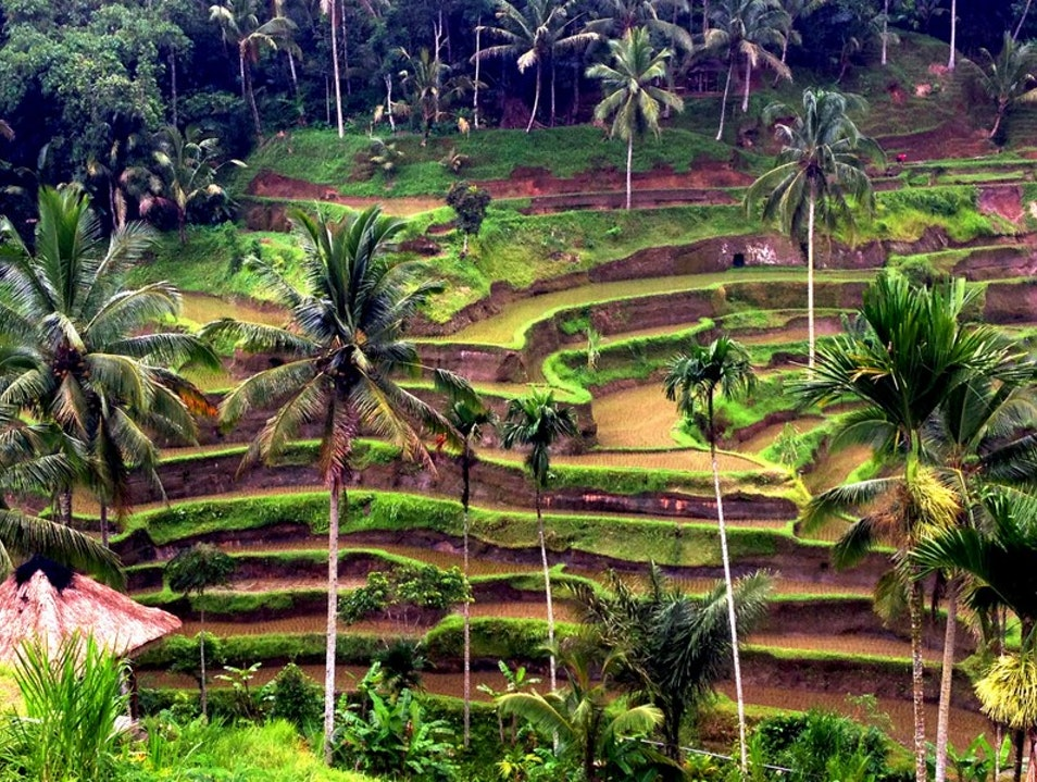 Rice Terrace  Tegallalang  Indonesia