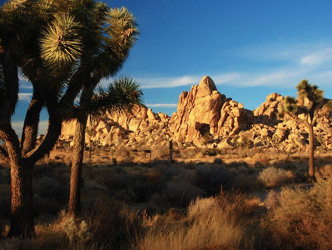 Joshua Tree, Very Pretty