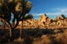 Joshua Tree, Very Pretty Twentynine Palms California United States