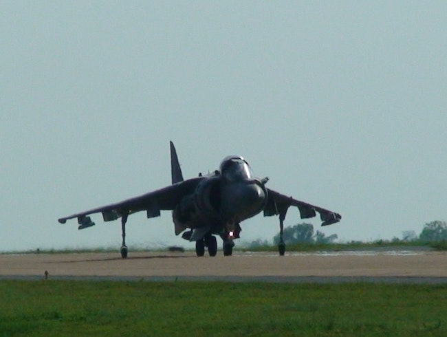 Harrier in Thailand