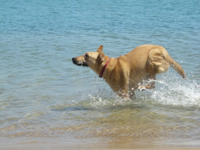 Chicago's Dog Beaches
