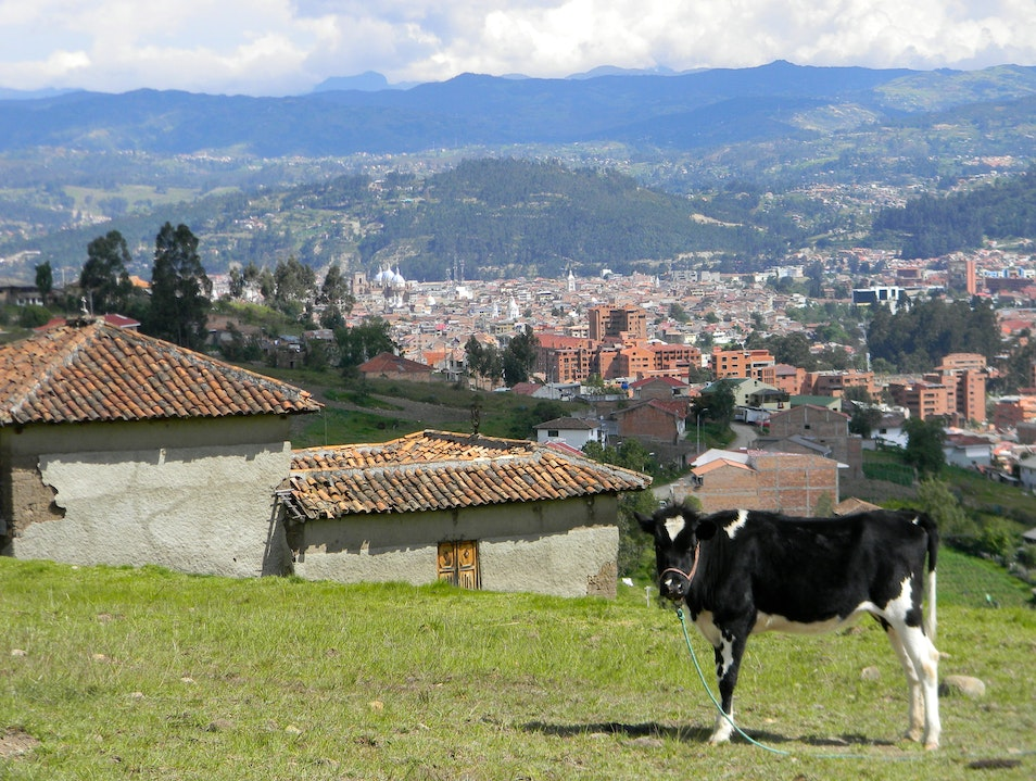 A Cow with a Heart and his View of Cuenca Cuenca  Ecuador