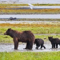 Pack Creek Bear Sanctuary Angoon Alaska United States