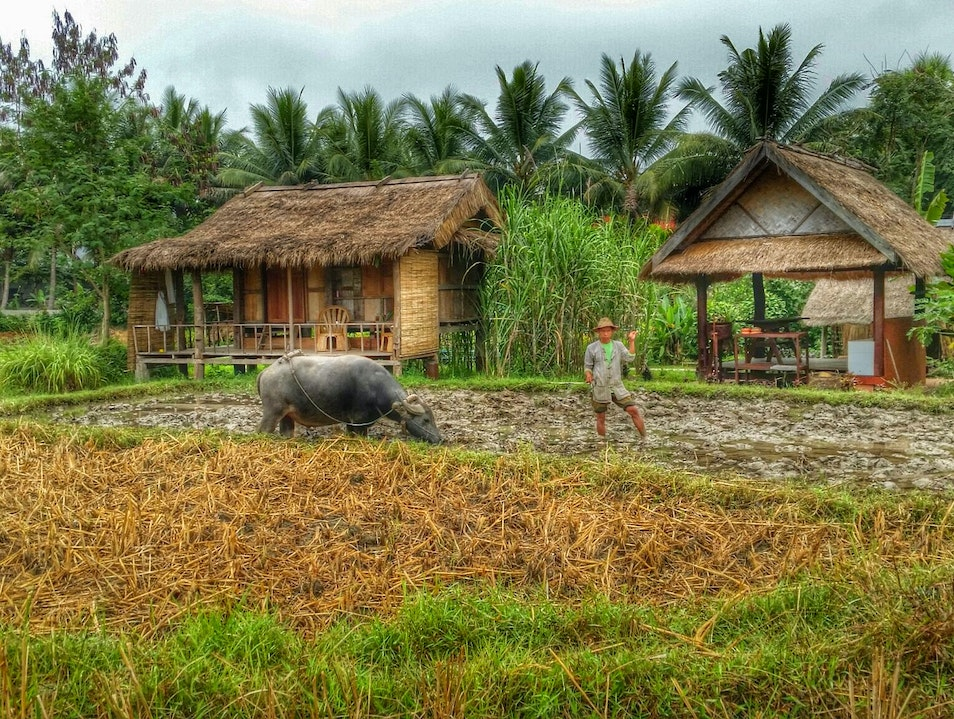 Learn How to Grow Rice at an Organic Farm in Laos