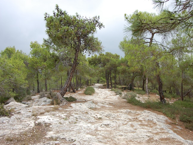Get away from the humidity of Mersin and hike the trails of this forest!