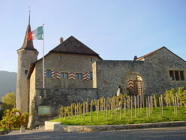 A Wine Museum Amid the Vines