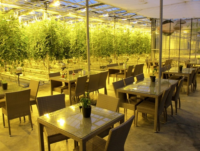 A Geothermally Heated Organic Tomato Greenhouse & Cafe in Iceland