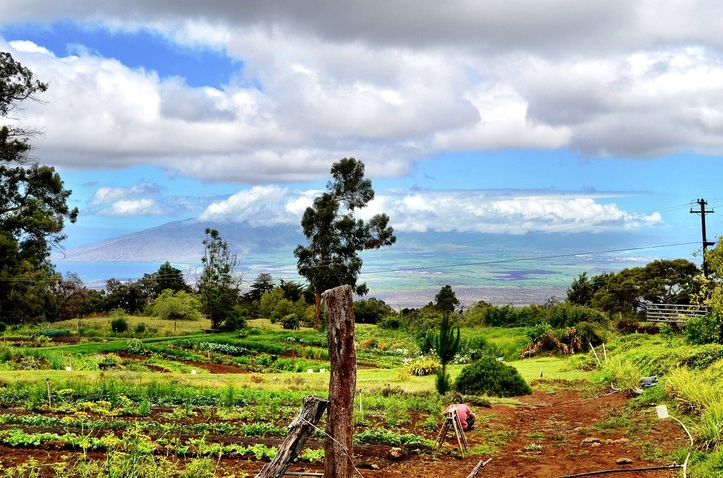 Farm to Farm Eating on Maui