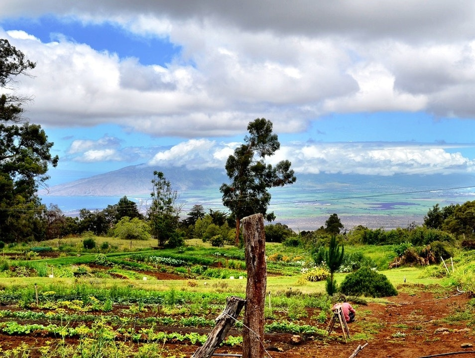 Farm to Farm Eating on Maui Kula Hawaii United States