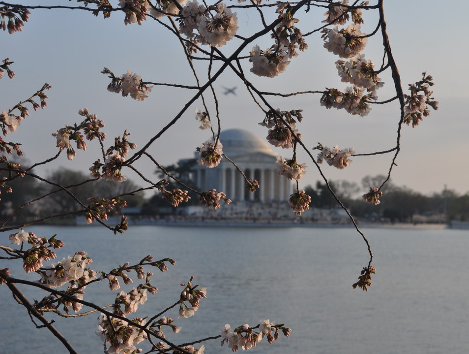 Flowers and Monuments Washington, D.C. District of Columbia United States