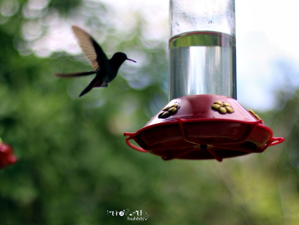 WHERE CAN YOU FIND THE HOME OF THE HUMMINGBIRD | LEISURELY, PEACEFUL AND THERAPEUTIC IN A TWIN ISLAND REPUBLIC Tunapuna-Piarco  Trinidad and Tobago