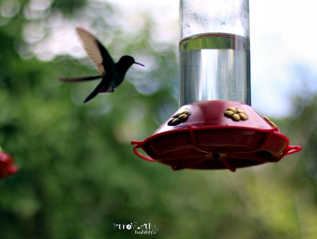 WHERE CAN YOU FIND THE HOME OF THE HUMMINGBIRD | LEISURELY, PEACEFUL AND THERAPEUTIC IN A TWIN ISLAND REPUBLIC