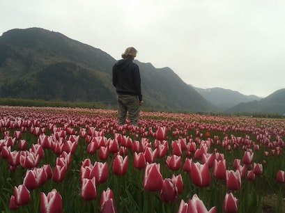 Tulips of the Valley Agassiz  Canada