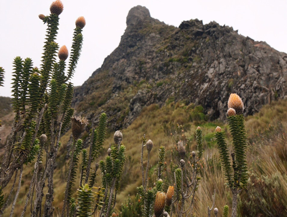 Acclimatize to the Altitude with a Testing Hike  Quito  Ecuador
