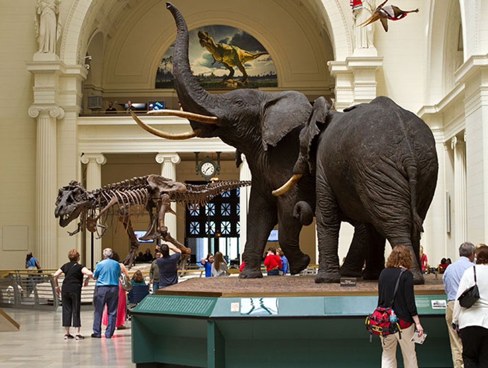 The Field Museum  Chicago Illinois United States