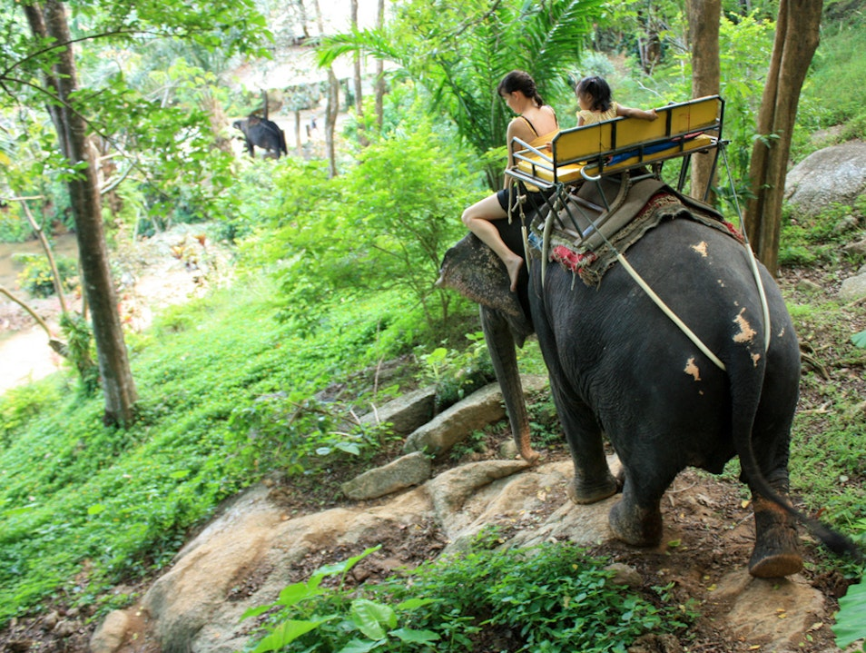 Elephant Trekking at Ton Pariwat Wildlife Sanctuary