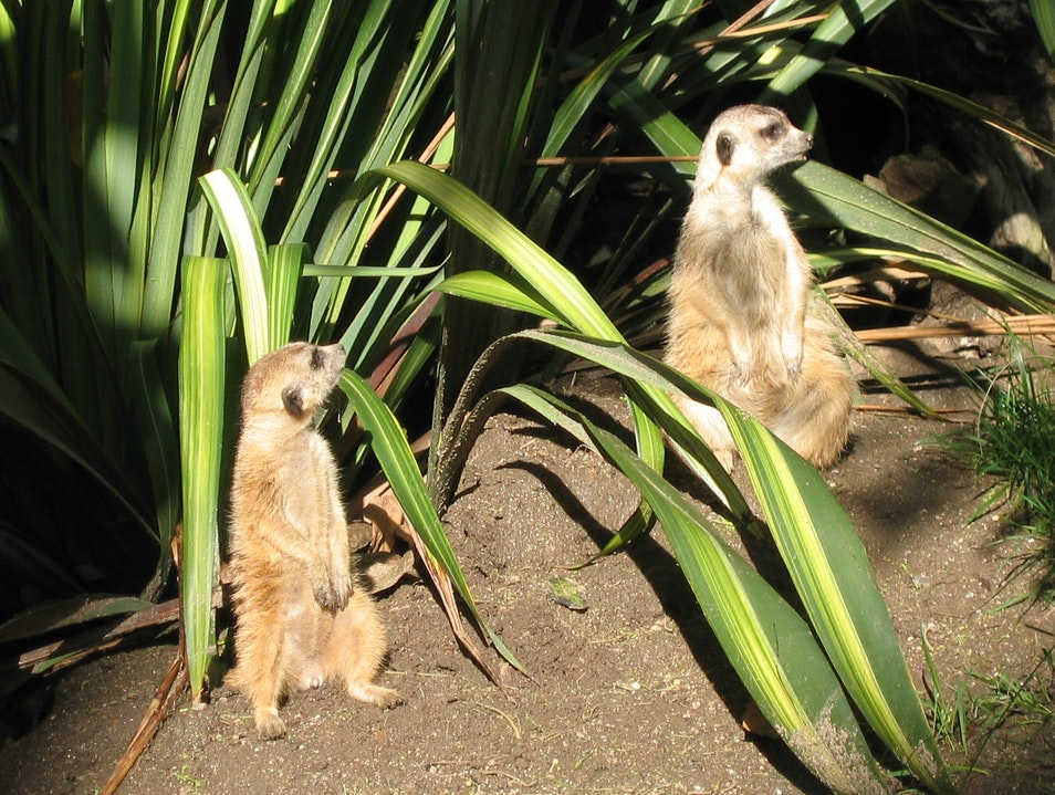 The meerkats San Diego California United States