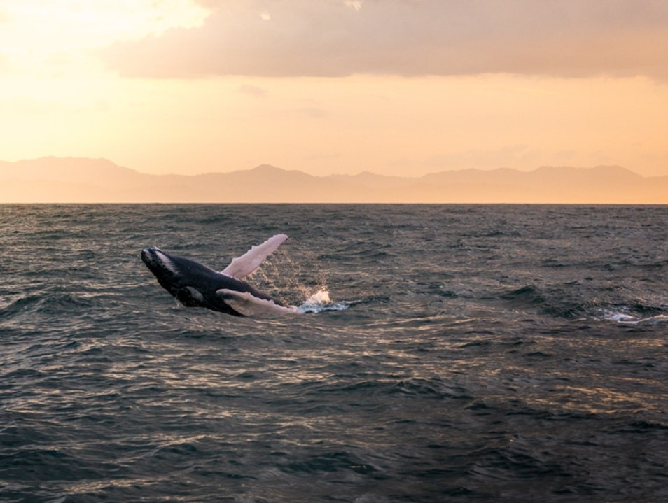 Watch the Whales in Samaná Bay   Dominican Republic
