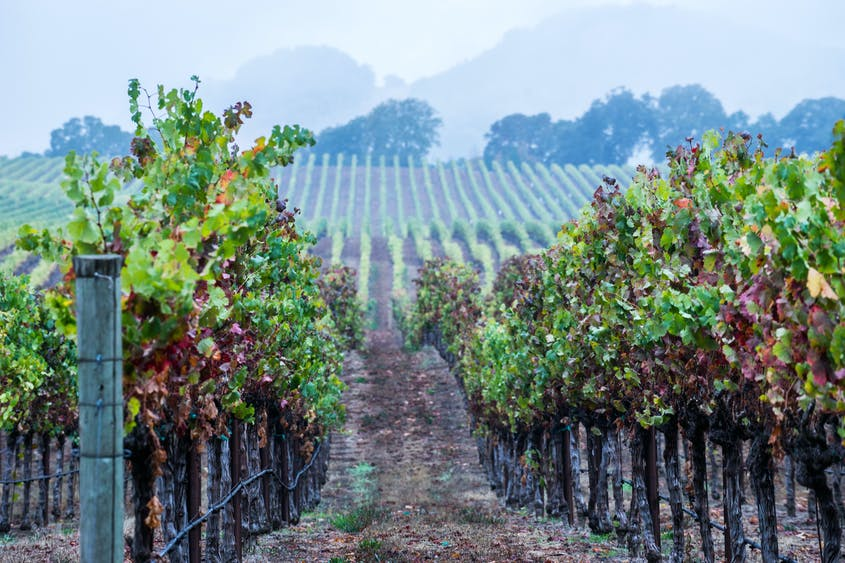 Taste your way through the Anderson Valley, just a 45-minute drive inland.