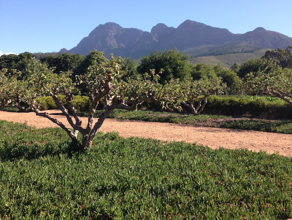 Walk the orchards at the Babylonstoren gardens Paarl  South Africa