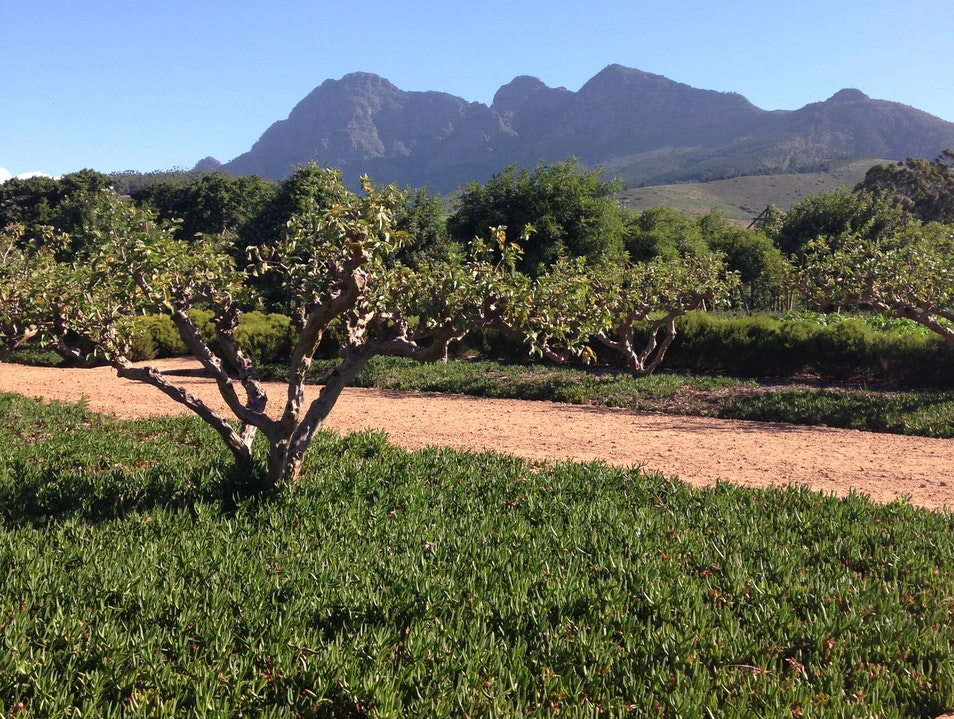 Walk the orchards at the Babylonstoren gardens