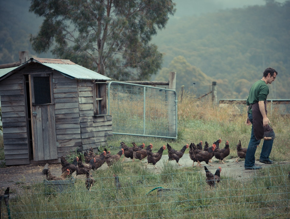 Work for it: The Agrarian Kitchen