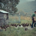 The Agrarian Kitchen Lachlan  Australia