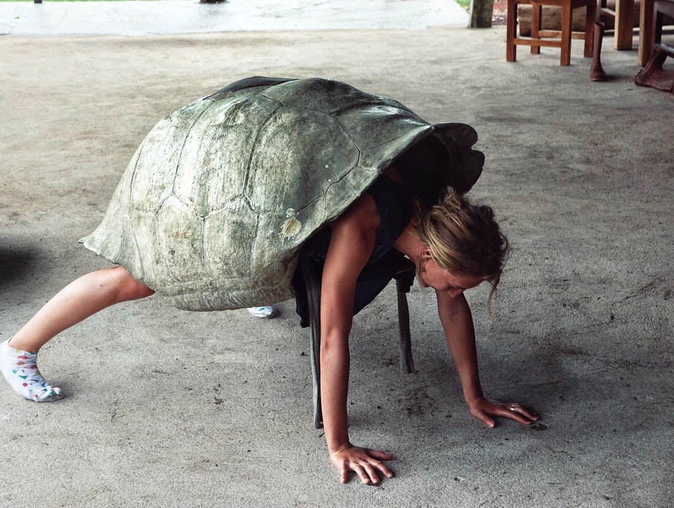 Turn into a tortoise