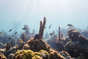 Snorkeling at Bight Reef