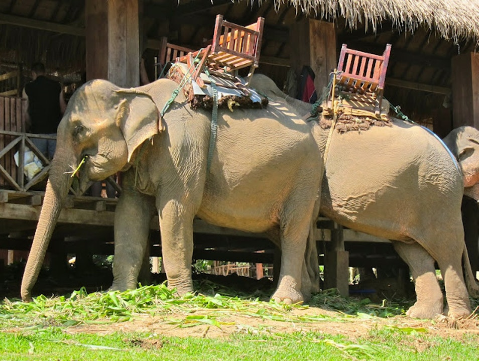Olyphant Snacktime Louangphabang  Laos
