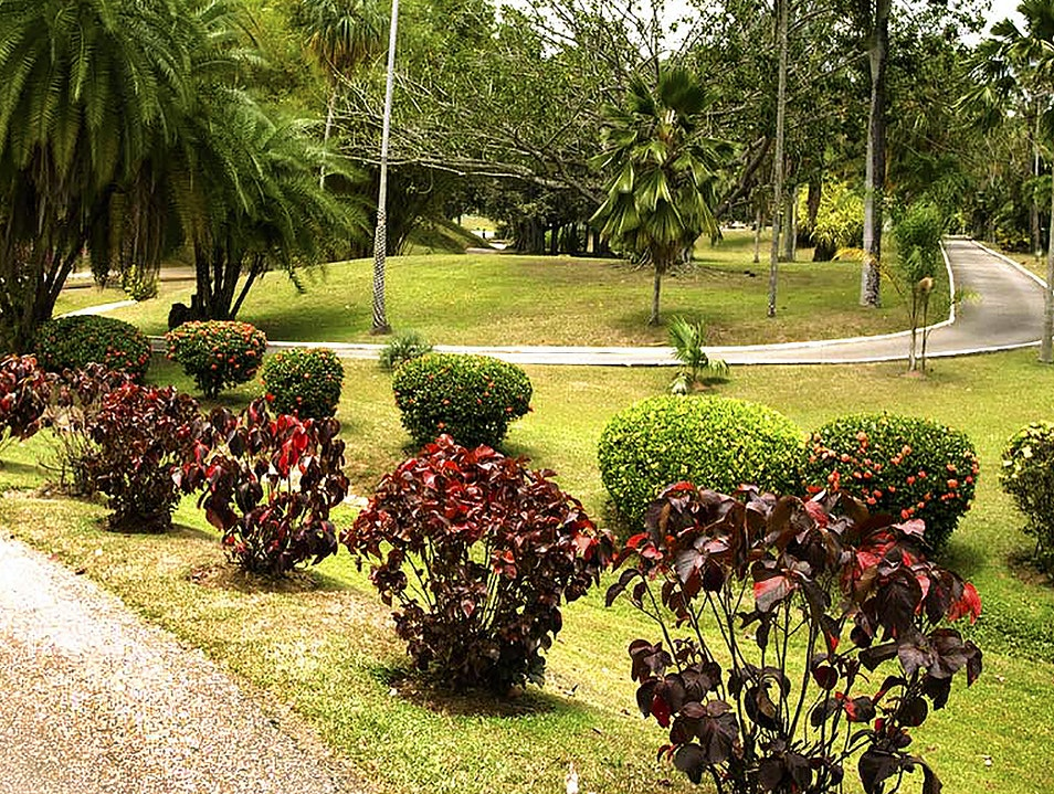 Royal Botanic Gardens Port Of Spain  Trinidad and Tobago