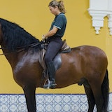 Original c andalusia 20school 20of 20equestrian 20arts 20m33 558522.jpg?1447819875?ixlib=rails 0.3