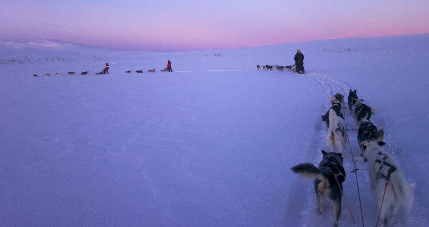Original staffan widstrand dog sledding 90.jpg?1568002745?ixlib=rails 0.3