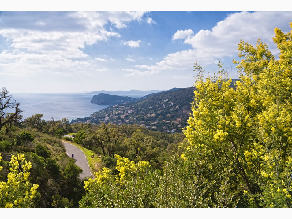 The Fragrant French Riviera