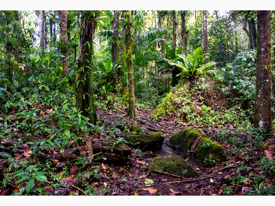 Rain Forest Expeditions