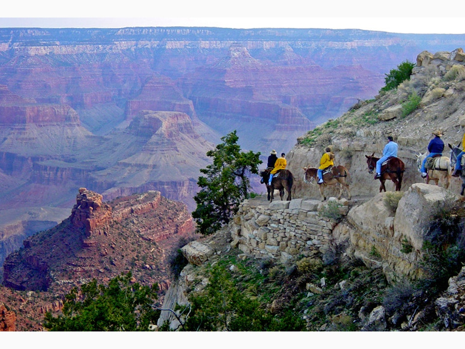 Ride into the Canyon on a Mule Train