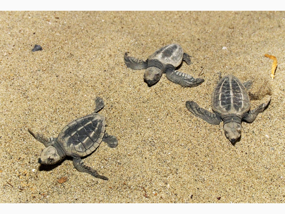 Sea Turtle Breeding Grounds